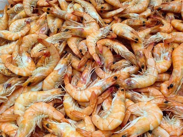 Shrimp 727214 640