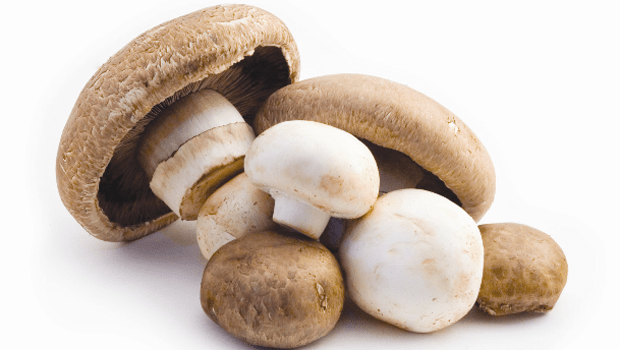 medley-mushrooms Labeling System